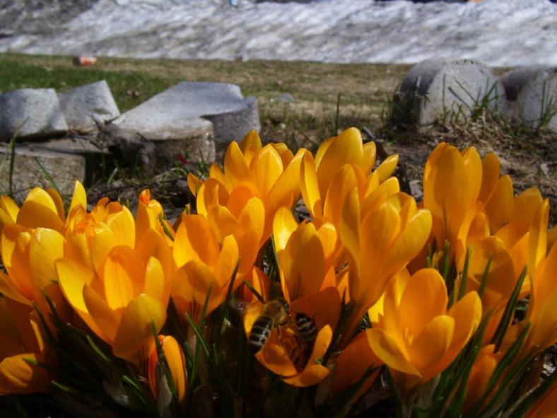 Vankleek Hill garden