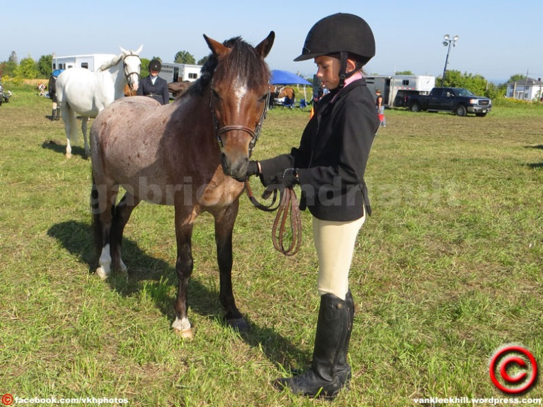 light horses at the Vankleek Hill fair