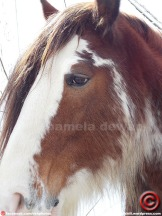 032313 horse