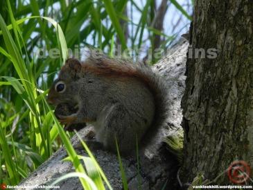 A nice squirrel having a picnic.