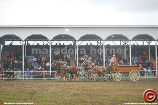 maradora horner 2014 vkh fair 08