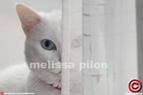 082714 09 melissa pilon c feat
