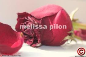 082714 21 melissa pilon c feat