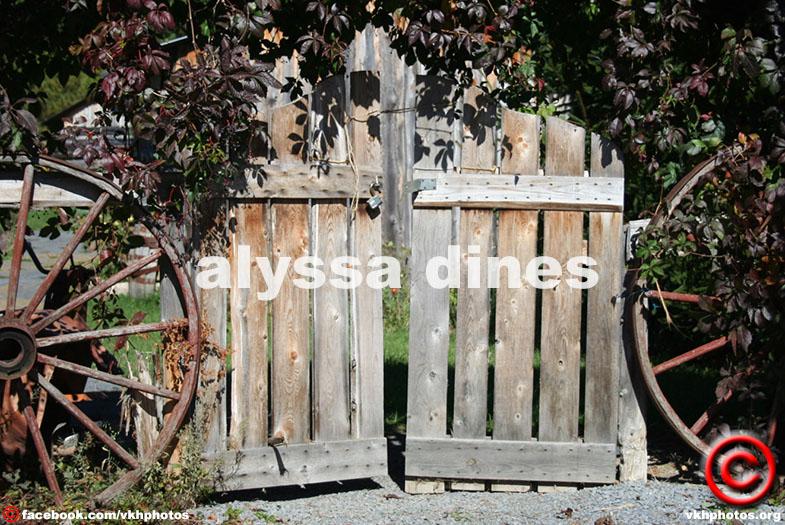 Alyssa Dines