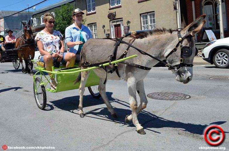 070719 donkey