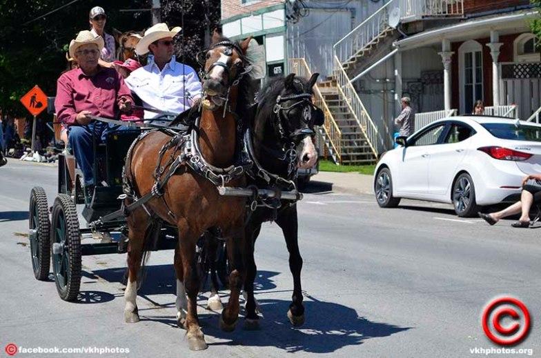 070719 horse 01