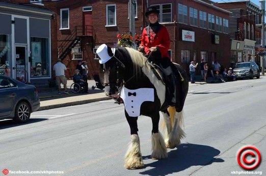 070719 horse 02