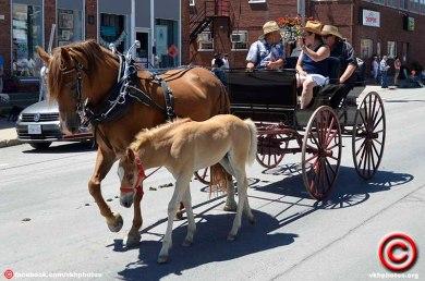 070719 horse 03