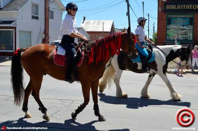 070719 horse 05b