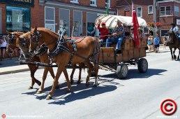 070719 horse samme 02
