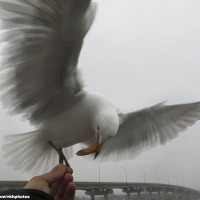 Feeding The Gull